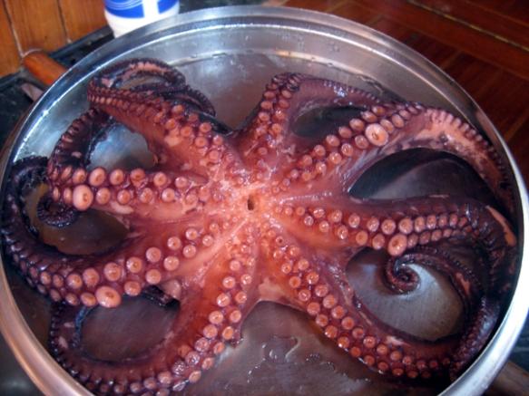 Kleiner-Octopus-gekocht