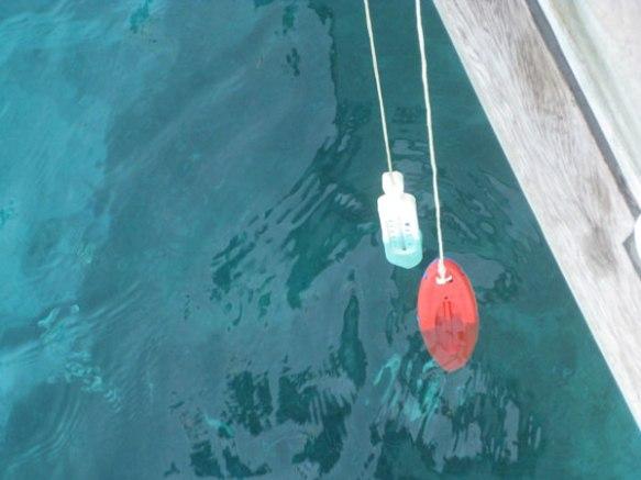 Zwei-Thermometer-im-Wasser